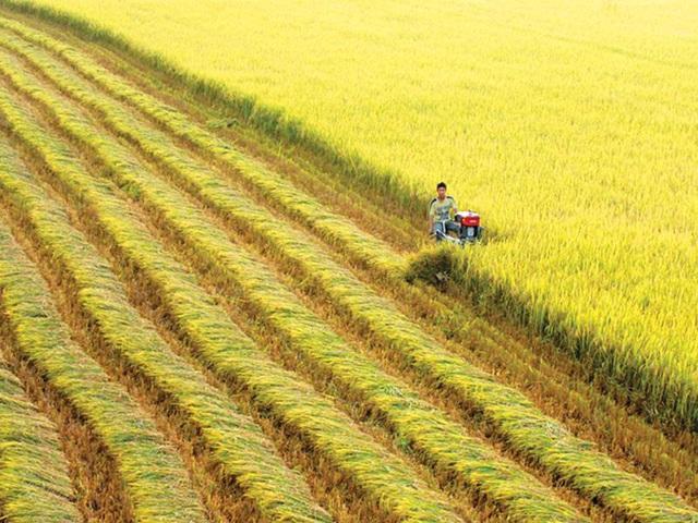 dat nong nghiep la gi - Tìm hiểu về việc xây nhà trên đất nông nghiệp bị phạt bao nhiêu?