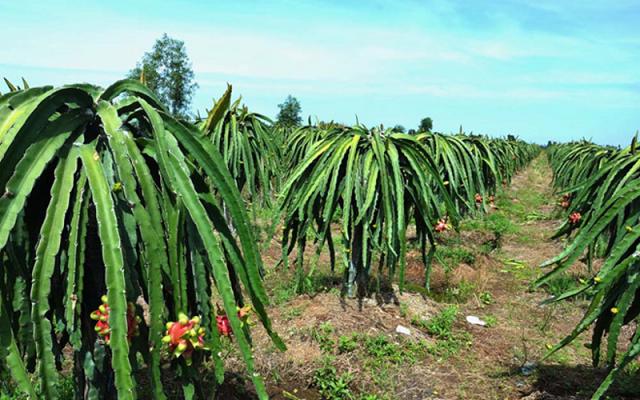 Dat trong cay lau nam - Giải đáp thắc mắc: Đất trồng cây lâu năm có được xây nhà không?