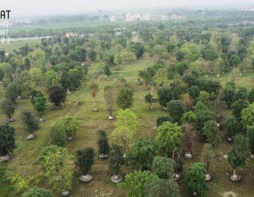 CĐT ươm trồng trước rất nhiều cây cổ thụ